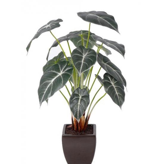 Kamerplanten bestellen
